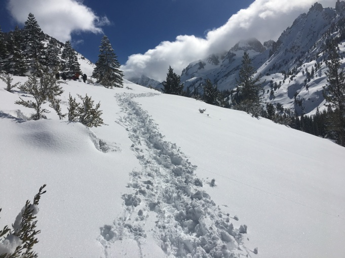 Making fresh tracks... (Horse Creek Trail, Twin Lakes, Bridgeport, CA)