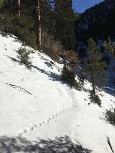Animal Tracks!