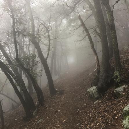 Misty Sturtevant Trail
